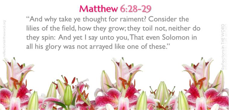 Matthew 6-28-29 alt